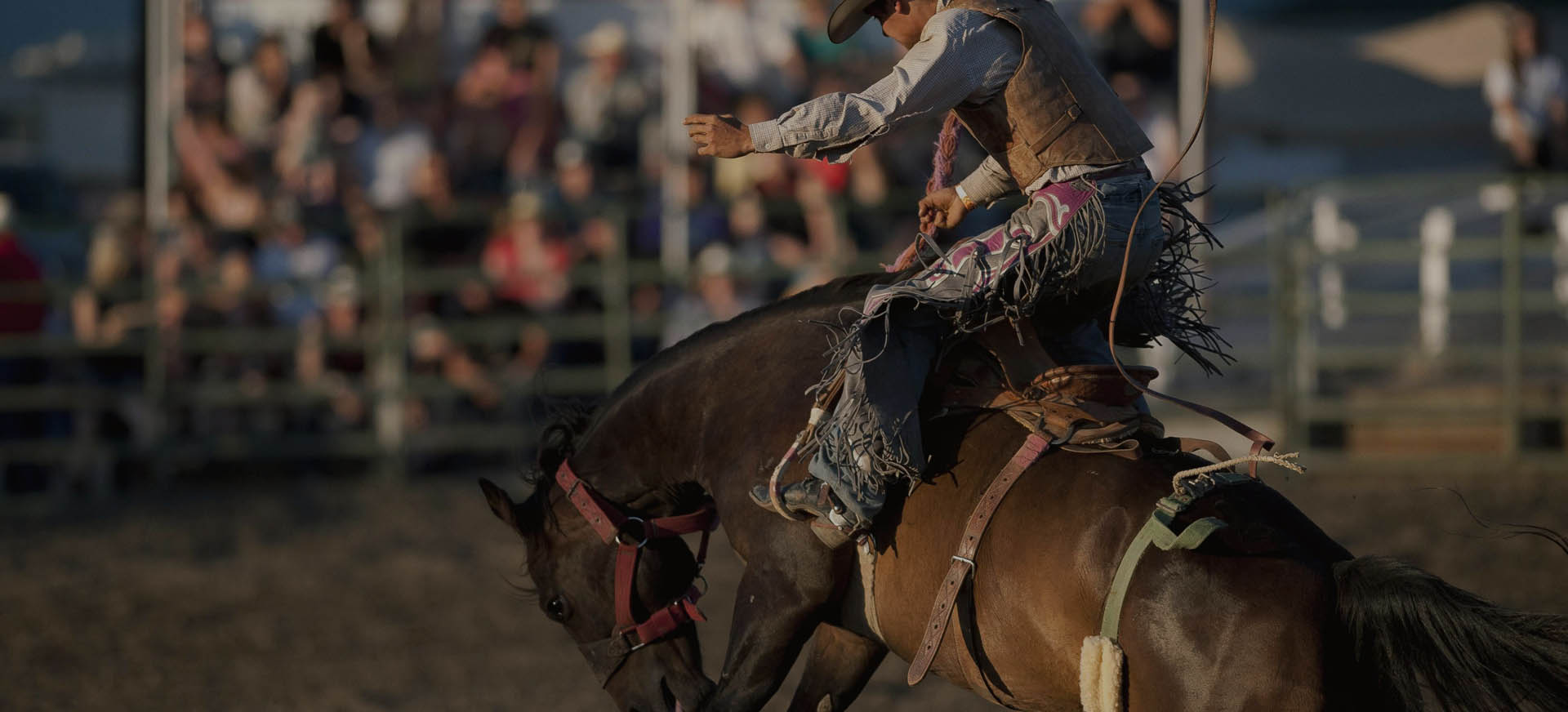 Famous Preston Night Rodeo